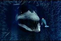 Dolphin-b