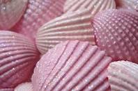 Seashells3