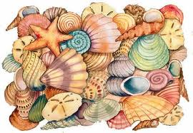 File:Seashells2.jpg