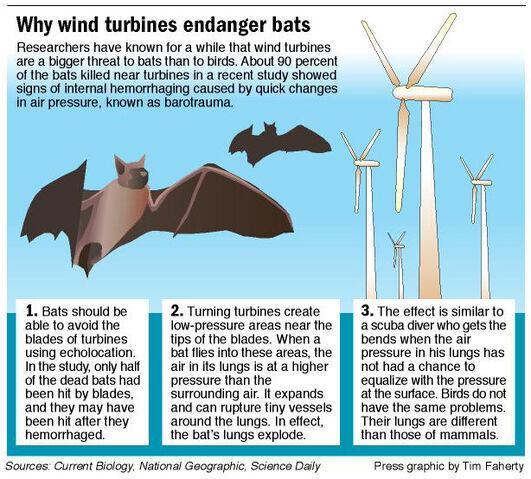 File:Bats-graphic1-1-.jpg
