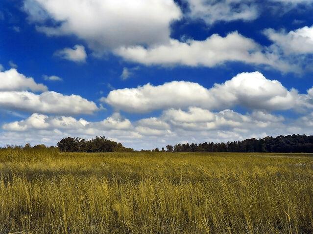 Fichier:Cumulus de beau temps2.jpg