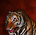 File:Spotted Tiger - Icon.png