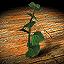 Isatis Root (good) - Icon (Big)