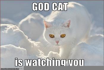 File:God-cat-meme.jpeg