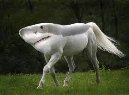 File:Horseshark.jpg
