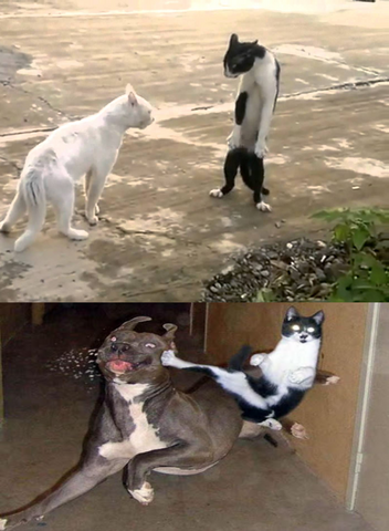 File:Bruce Lee Cat - Berseker Mode.png