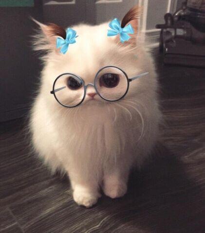 File:Ms kitty.jpg