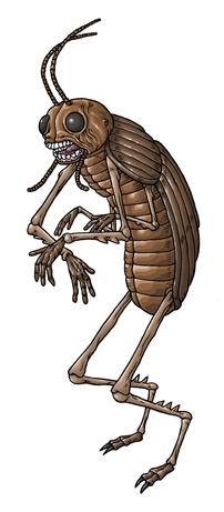 File:24-coleopteran.png