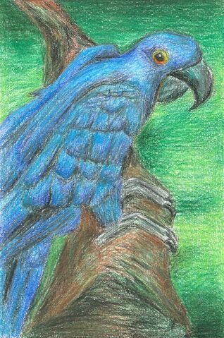 File:Michelle Alonso Hyacinthine Macaw.jpg