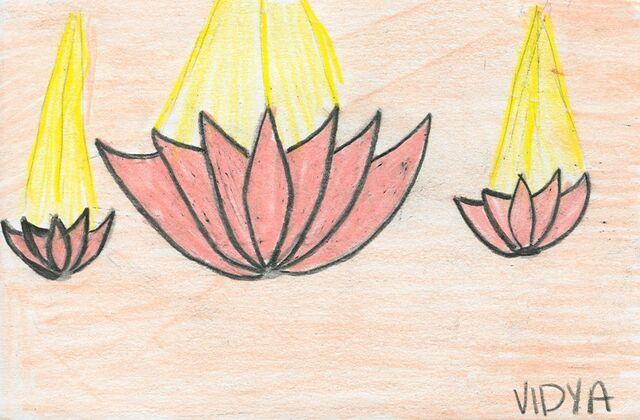 File:Vidya Vinnakota lotus flowers.jpg