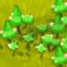 Plant Death Cap