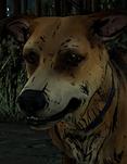 Сэм (собака)