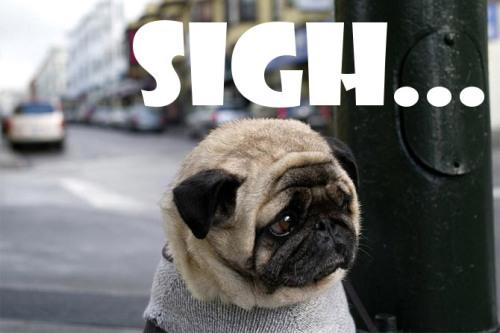 Sad Puppy Dog Eyes Meme