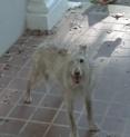 File:117px-Walking dead 1 eyed dog.png
