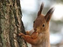 File:Squirrels.jpg