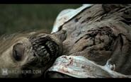 The Walking Dead Webisodes6