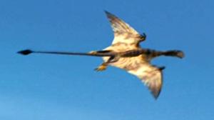 Pterosaur triassic