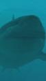 Megalodon shark.png