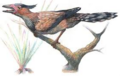 Sinornis new.png