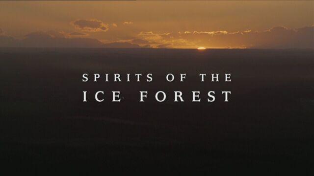 File:SpiritsOfTheIceForest.jpg