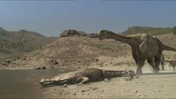 Size commparison of a sarcosuchus to an argentinosaurus