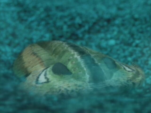 File:WWM1x1 Trilobite.jpg