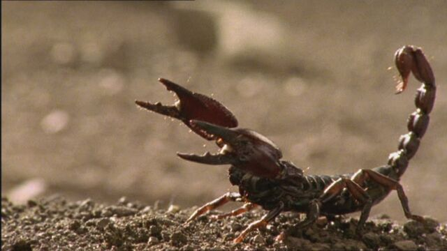 File:BA Scorpion.jpg