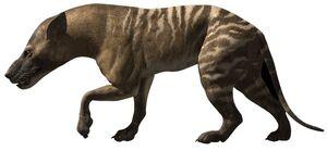 HyaenodonInfobox