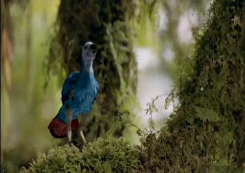 File:Cretaceous bird.png