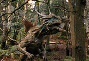 Dracorex1