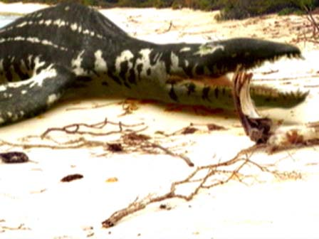 File:Beached liopleurodon.jpg
