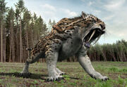 Prim Sabertooth