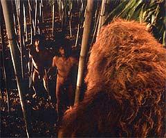 File:Gigantopithecus blacki img2.jpg