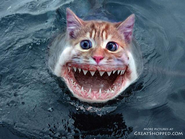 File:24-catshark copy.jpg