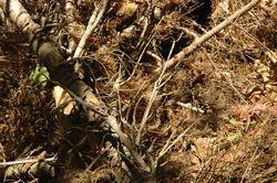 Snake-camouflage-1-