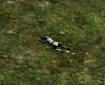 Sniper in Prone Position