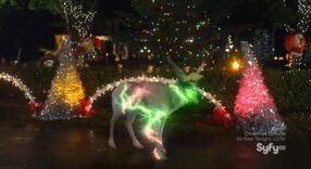 Rudolphs nose dog