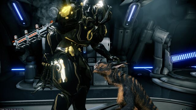 File:Tiger Kubrow Grown up.jpg