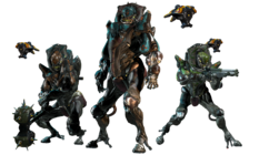 The Grustrag Three