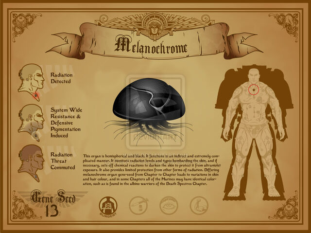 File:Space marine melanochrome by the first magelord-d4beby3.jpg