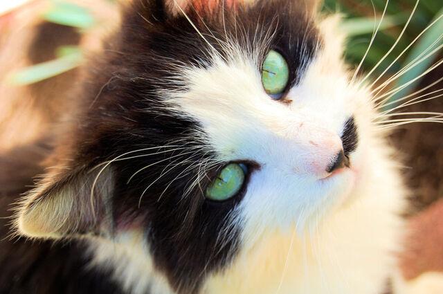 File:Green Eyes IV by Mefubool.jpg