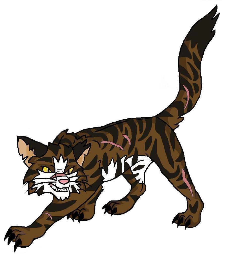 Hawkwing Warrior Cats