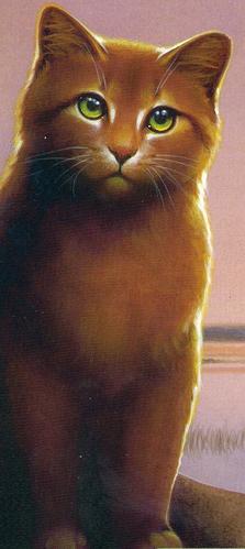 Warrior Cats Feuersterns Geschichte