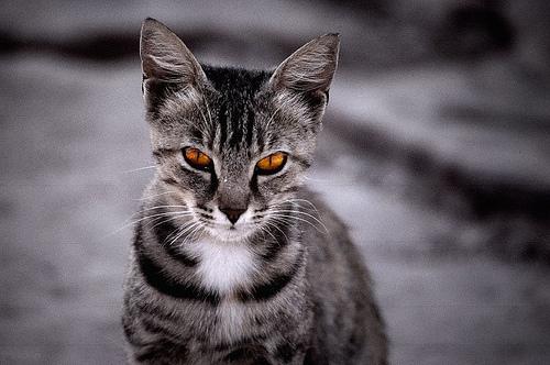 File:Tigernight.jpg
