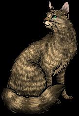 Jadefur.warrior