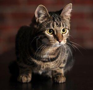 16856075-mackerel-tabby-cat