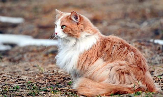 File:Grell Cat.png