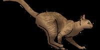 Geckotalon