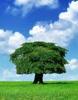 File:Lonetree.jpg