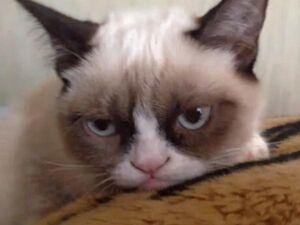 Grumpy-cat-600